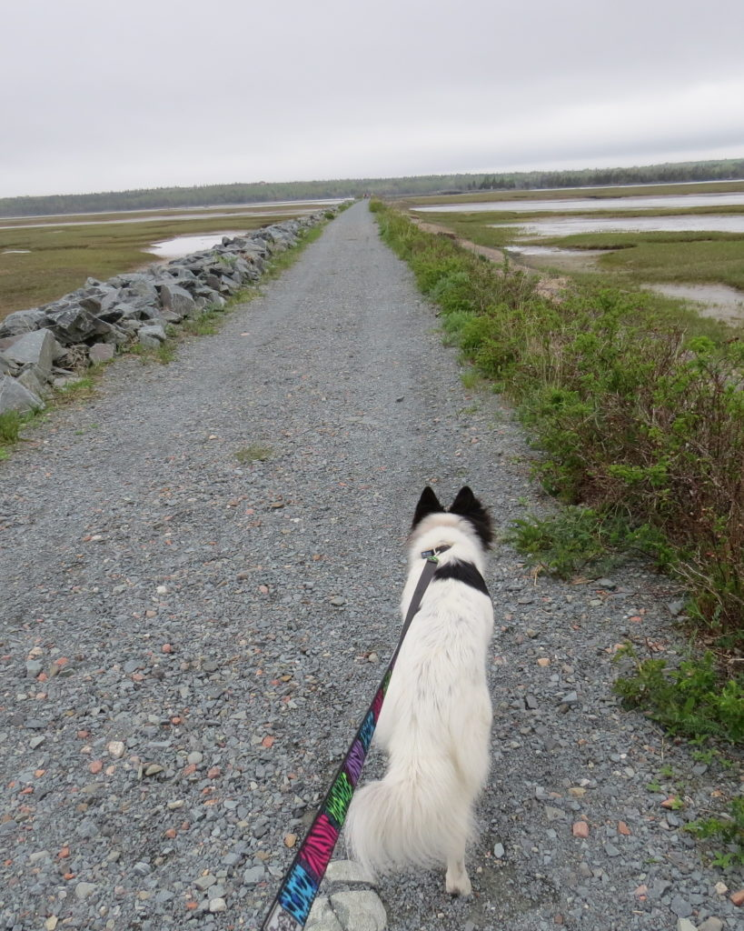Me and my dog Macy doing a little walking/birding on the beautiful Salt Marsh Trail.